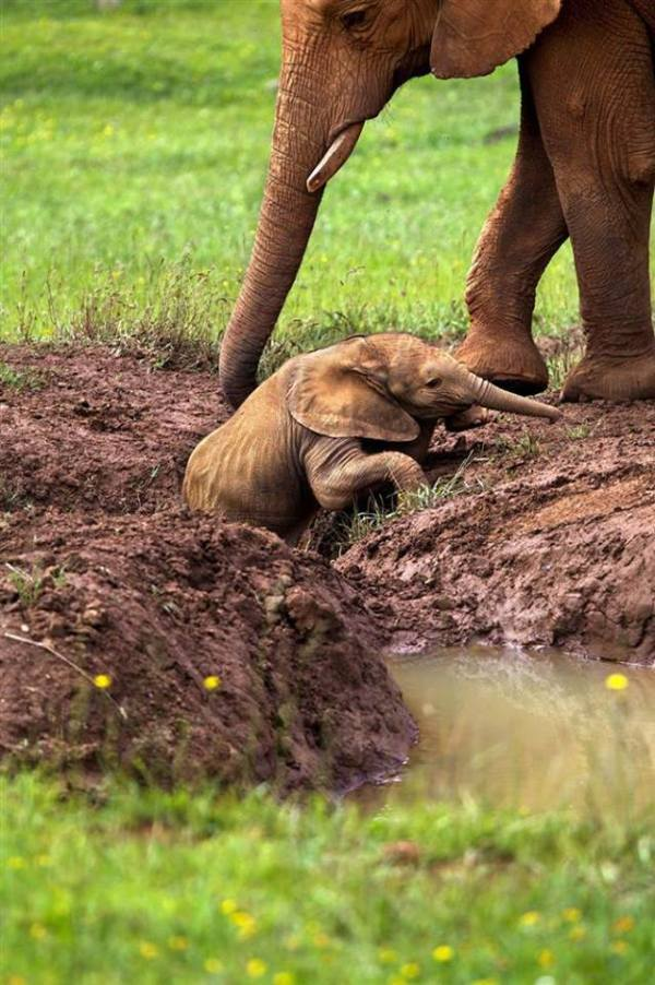 mother elephant and baby 1