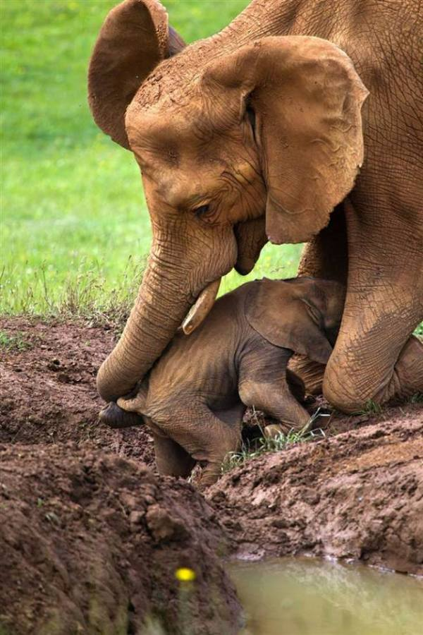 mother elephant and baby 2