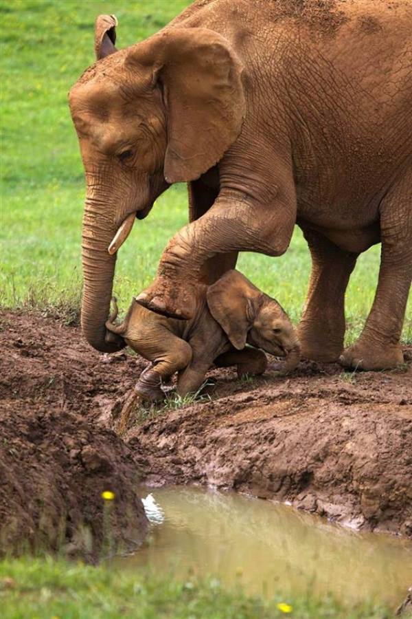 mother elephant and baby 3